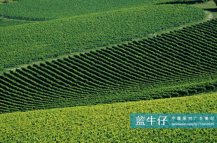 壁纸 草原 成片种植 风景 植物 种植基地 桌面 725_481